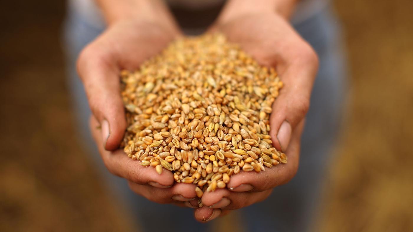 Озонирование зерна